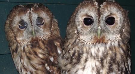 Avon Owls Easter 2016 Weston super Mare